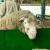 Ministarstvo poljoprivrede daje podsticaje za osiguranje životinja i useva