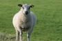 Preventivna zaštita i bolesti ovaca