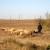 Organizacija zimskog jagnjenja ovaca
