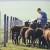 Bodovna lista podložna promenama, isplata za mlade poljoprivrednike do kraja godine