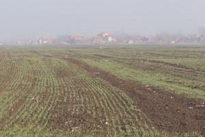 Ozime strne kulture u Kolubarskom okrugu dobro podnose zimu