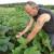 Na plantaži bamije obitelji Perija: Znate li da je bamija jedina biljka koja sadrži prirodni botoks?