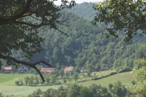 U Srbiji pod šumom 30 odsto, a u Vojvodini svega šest procenata