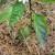 Ljubičasta boja i uvijanje lista paprike: Kako sprečiti ovu pojavu?