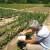 U usevima paprike registrovano prisustvo tripsa, obavezan pregled metodom otresanja cvetova