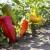 Ilsamin folijarnim gnojivima do većih i kvalitetnijih plodova u eko uzgoju!