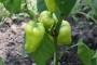 Urbani poljoprivrednik - uzgojem vlastite hrane pojedinac uzima kontrolu u svoje ruke!