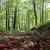 Svetski je dan šuma - ključna je njihova obnova