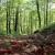 Svjetski je dan šuma - ključna je njihova obnova