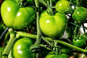 Zelenu rajčicu možete iskoristiti za slana i slatka jela