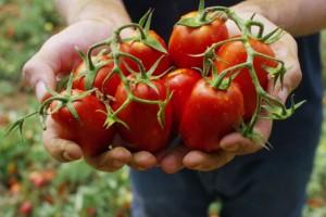 Uskoro i BiH paradajz postaje brend?