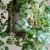Uzgajajte cheery paradajz naopačke - moguće je!