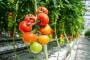 Uzgoj povrća za dodatni prihod