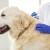 Srčani crv kod pasa prenose komarci: Koliko je opasan i kakvo je liječenje?