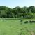 Slavonski pašnjaci - zaboravljena blaga, u sela se vraća utvaj