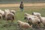 Nećemo više uvoziti pastire i samaraše
