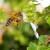 """EFSA: Prikupljanje i analiza podataka mogla bi biti """"prekretnica"""" u europskoj kampanji za zaštitu pčela!"""