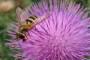 Na pčelarski sajam u Gudovac dolaze i Finci