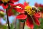 Pčelarima 18 milijuna kuna potpore