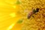 """Seminar """"Ekološko pčelarstvo s primjerima dobre prakse"""""""