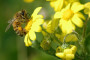 Pčelari zadovoljni sastankom s Čobankovićem