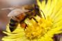 Europska komisija istražuje insekticide