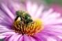 Europska komisija zabranjuje pesticide