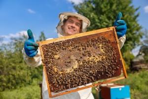 Prijavite se na tečaj za pčelara - prijašnje pčelarsko iskustvo nije bitno!