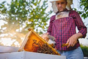 Bolest u pčelinjaku: I med oboljelih pčela potrebno je spaliti