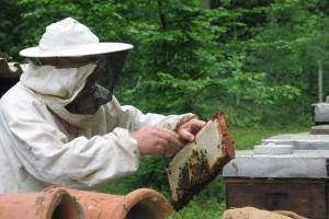 Mjere opreza kod američke truleži - šta napraviti ako dođe do zaraze pčelinjeg društva?