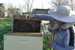Užice: Četiri milona dinara podsticaja za pčelare