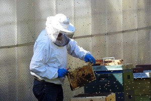 Konkurs za pčelare na teritoriji Vojvodine do 15. maja