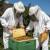Za uspješno prezimljavanje, pčelama osigurajte dohranu sirupom i mir
