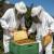 Za uspešno prezimljavanje, pčelama obezbedite dohranu sirupom i mir