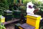 Županija daje potpore za 520 pčelara!