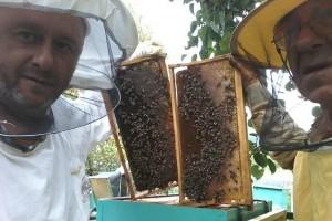 Senadin Didik: Svi su bolje organizirani od pčelara, zato u udruženja treba birati prave pčelare i poštene ljude