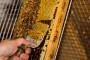 Pčelarstvo - dobra zarada uz  puno rada