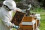 Pčelarstvo kao ravnopravna grana poljoprivrede