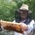 Sve o pčelama naučio je od tate Vlade, med i medice Roberta Kosa obišli cijeli svijet