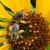 Kako se poljoprivredna zajednica pokreće da bi zaštitila pčele - hrvatski pčelari u Bruxellesu