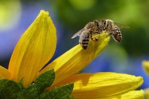 Znanstvenici otkrili novih 27 virusa koji prijete pčelama!