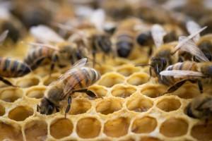Pčelinjak - posljednje pripreme za lakše prezimljavanje pčela