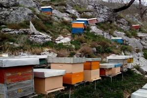 Loša godina za hercegovačke pčelare - ima li još vremena da se što popravi?