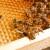 Kako pripremiti rastvor oksalne kiseline i tretirati pčele od varoe?