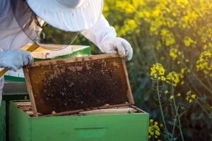 Šta da radite ako u svom dvorištu primetite roj pčela?