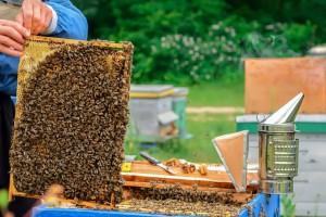 Matičnu mliječ uzimajte od provjerenih pčelara jer je nestručno rukovanje čini štetnom