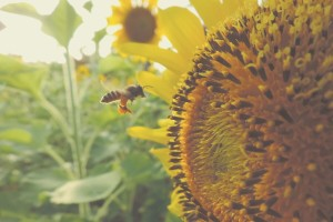 Čovek zavisi od pčela i drugih oprašivača - neka svaki dan bude njihov