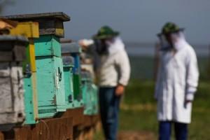Evropska komisija povećava podsticaje sektoru pčelarstva EU za 12 miliona evra