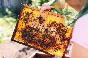 Kada su temperature visoke, pčelama osigurajte dovoljno vode