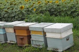 Kako da utoplite pčele pred zimu